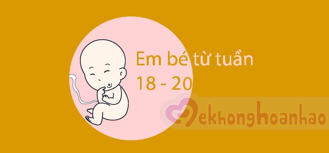 Sự thay đổi của thai nhi ở tuần 18 đến tuần 20 có gì thú vị?