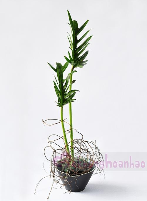 cam-hoa-dong-tien-don-gian-va-duyen-dang-hinh-anh5