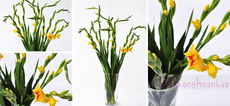 Cách cắm hoa lay ơn ngày Tết đơn giản