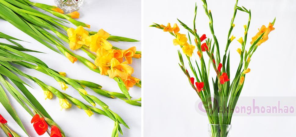 Cách cắm hoa lay ơn Tết đẹp giản dị và nhiều màu sắc