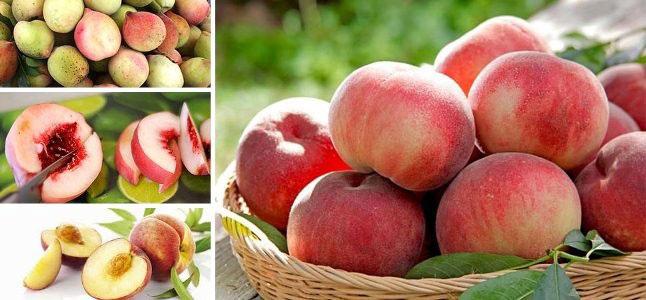 15 tác dụng tuyệt vời của quả đào đối với sức khỏe