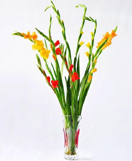 Cách cắm hoa lay ơn ngày Tết đón Tài Lộc vào nhà hình ảnh 10