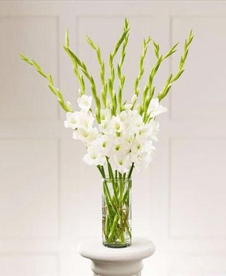 Cách cắm hoa lay ơn ngày Tết đón Tài Lộc vào nhà hình ảnh 11