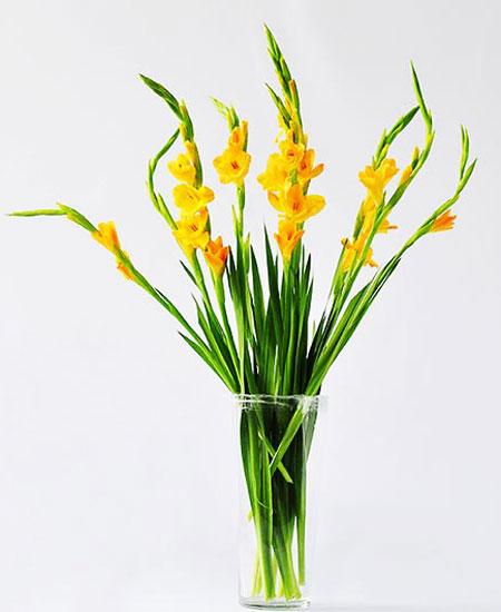 Cách cắm hoa lay ơn ngày Tết đón Tài Lộc vào nhà hình ảnh 8
