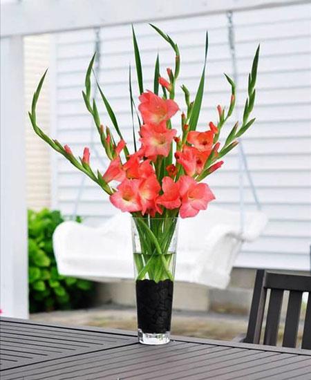 Cách cắm hoa lay ơn ngày Tết đón Tài Lộc vào nhà hình ảnh 9