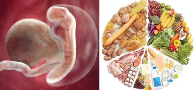 Mang thai tuần thứ 5: Sự phát triển của thai nhi và mẹ bầu nên ăn gì