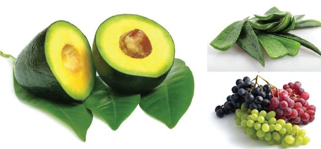Top 4 loại mặt nạ dưỡng ẩm cho da khô từ thiên nhiên